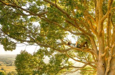 Gozdarska opravila med rastno sezono