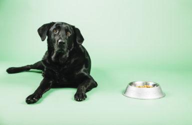 mokra hrana za pse